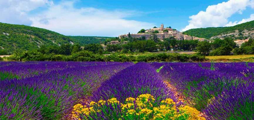 Lavendelvelden in regio: Provence