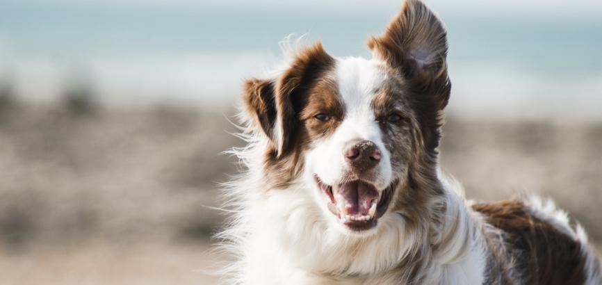 Samen met je hond in een vakantiehuis: 3 topbestemmingen