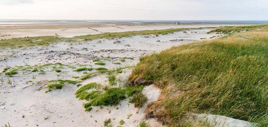 strand van waddeneiland Scharhörn